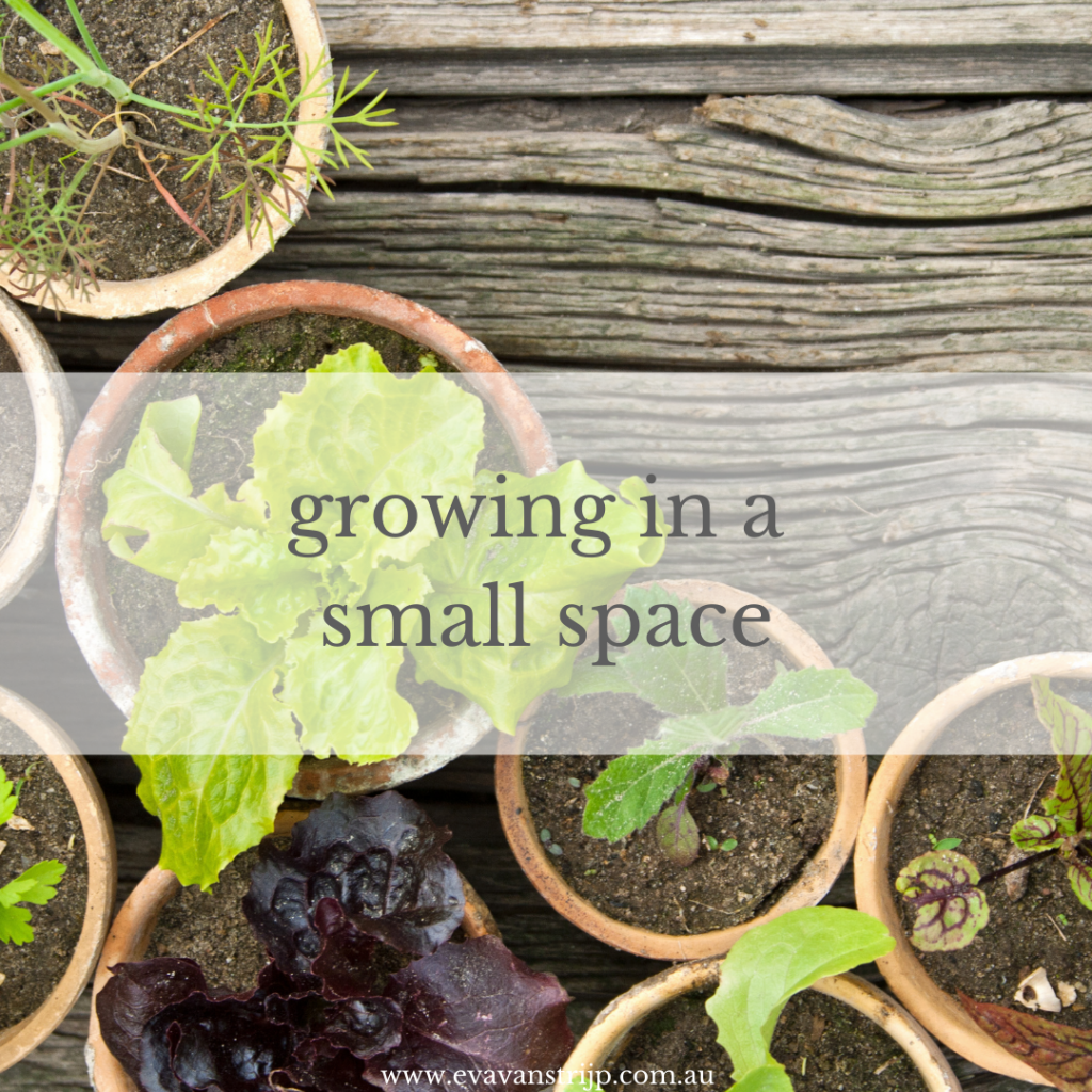 You don't need a hundred-acre hobby farm to start growing food. It's entirely possible in just a small area and sometimes less is more as we tend to use it more efficiently when space is at a premium.
