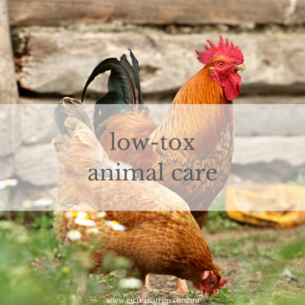 When we think about going low-tox outdoors, it can be easy to just think plants and weeds, but our animals are also in need of low-tox loving and some simple tweaks to their care routine can have profound benefits for their health and in turn, ours.
